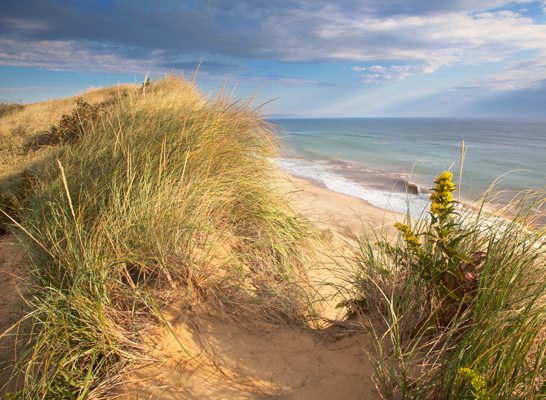 Landscapes & Seascapesw/ John Tunney