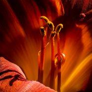 August 18 Creative Flower Photography w/ John Klingel