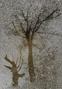 snow falling on trees