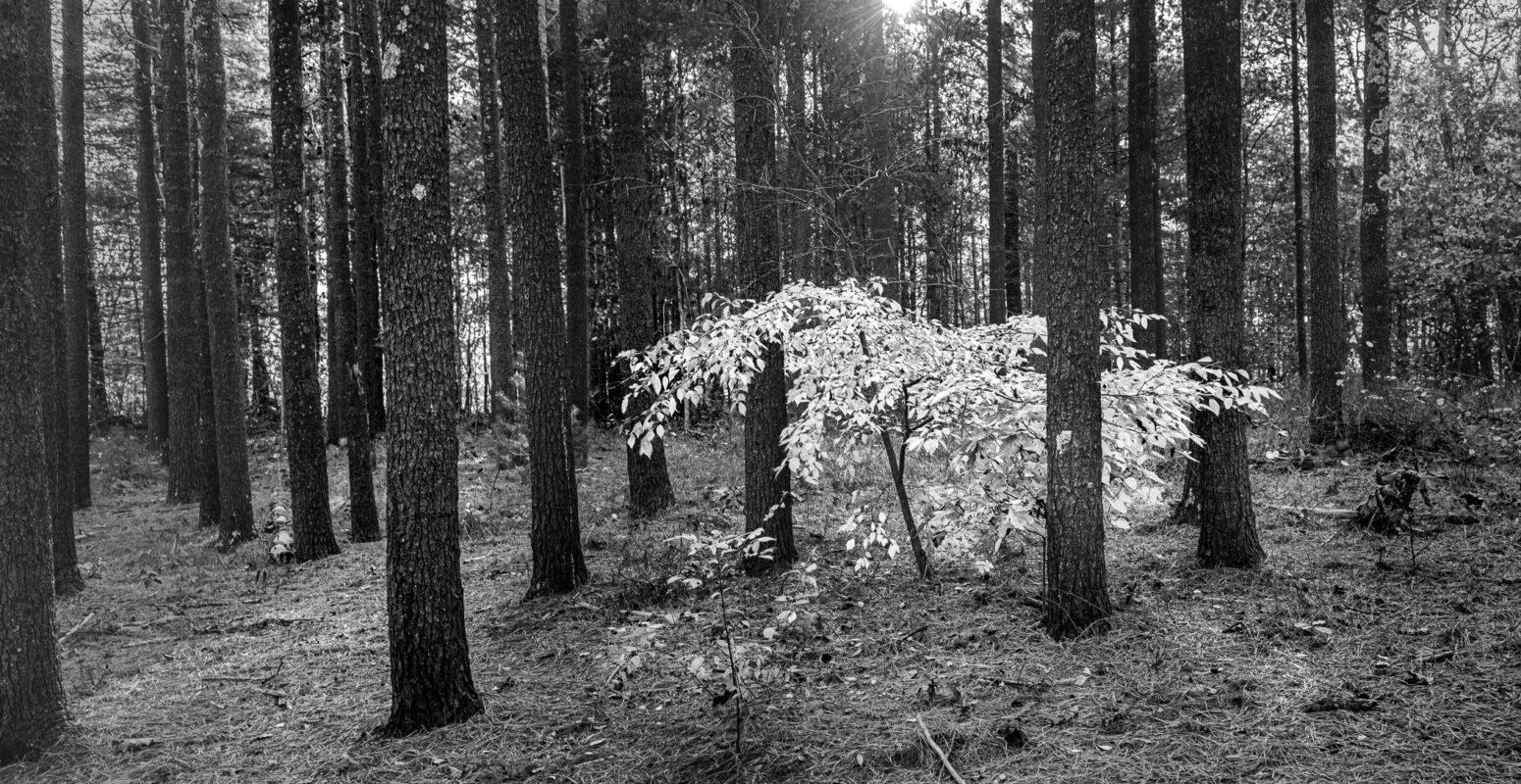 "September Solo Show – Rachel Jones – ""Life Among Trees"""